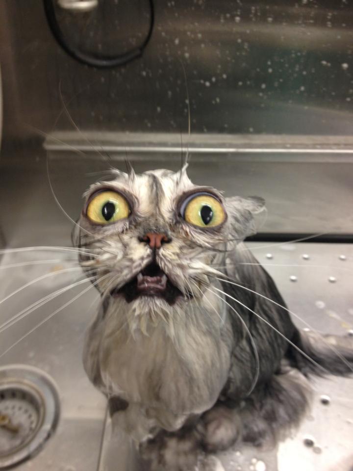 The Cat In Cat In The Rain